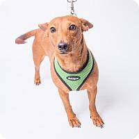 Adopt A Pet :: Arby - Jupiter, FL