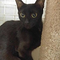 Adopt A Pet :: Neera....abandoned in apartment - Dallas, TX