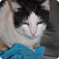 Adopt A Pet :: Nickolas - Northbrook, IL