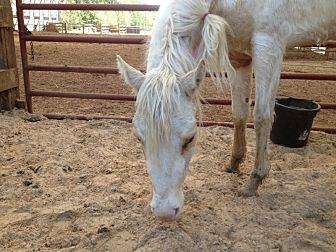 Quarterhorse Mix for adoption in Hitchcock, Texas - Suzie