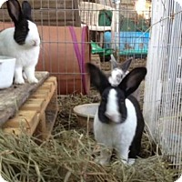 Dutch for adoption in Paradis, Louisiana - Bucky & Cookie