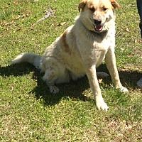 Adopt A Pet :: Freckles - Allentown, PA