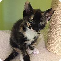 Adopt A Pet :: Brandy - Tampa, FL
