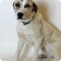 Adopt A Pet :: Roger - Spanish Fork, UT