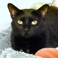 Adopt A Pet :: Satina - Westville, IN