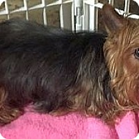 Adopt A Pet :: PENNY - Rossford, OH