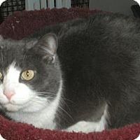 Adopt A Pet :: Brooke - Washington, VA