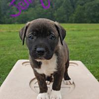 Adopt A Pet :: Jenny - Niagra Falls, NY