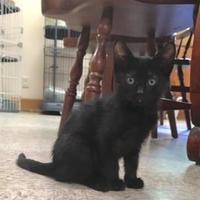 Adopt A Pet :: Jane - Cashiers, NC