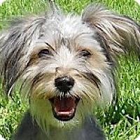 Adopt A Pet :: Bailey - Kingwood, TX