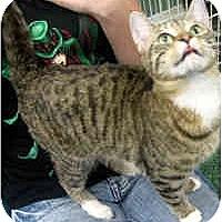 Adopt A Pet :: Melia - Jacksonville, FL