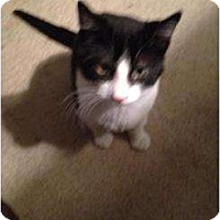 Adopt A Pet :: Oreo - Mobile, AL