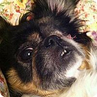Adopt A Pet :: PRU PRU - Shirley, NY