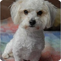 Adopt A Pet :: Hennessey - Milan, NY