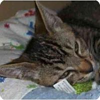 Adopt A Pet :: Jackson - Annapolis, MD