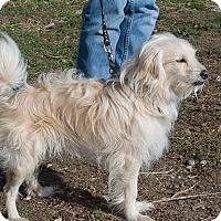 Adopt A Pet :: Darby - Lynnwood, WA