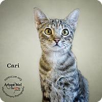 Adopt A Pet :: Cari - Phoenix, AZ