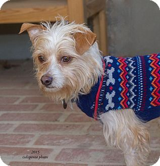 Terrier (Unknown Type, Medium)/Rat Terrier Mix Dog for adoption in Baton Rouge, Louisiana - Toby