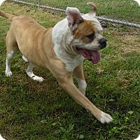 Adopt A Pet :: Slugger - Missouri City, TX