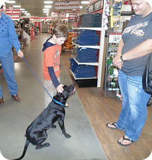 Labrador Retriever/Boxer Mix Dog for adoption in Glastonbury, Connecticut - Lucy