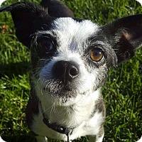 Adopt A Pet :: Chiquita - San Francisco, CA
