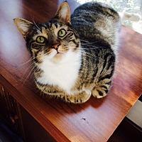 Adopt A Pet :: Sable - Chattanooga, TN