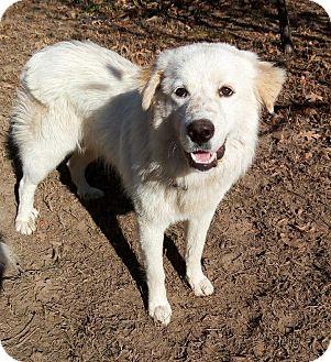 Great Pyrenees Mix Dog for adoption in Kiowa, Oklahoma - Wrangler