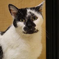 Adopt A Pet :: Chelsea - Glen Mills, PA