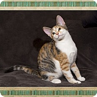 Adopt A Pet :: Mimosa - Mt. Prospect, IL