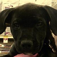 Adopt A Pet :: Chloe - Newnan, GA