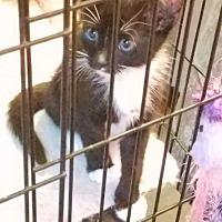 Adopt A Pet :: DRACO - Hazlet, NJ