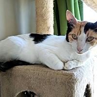Adopt A Pet :: Sarasa - Vancouver, BC