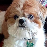 Adopt A Pet :: Jesse Watters aka Max - Euless, TX
