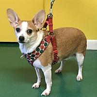 Adopt A Pet :: SWEET PEA - Fort Pierce, FL