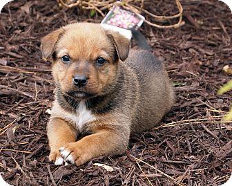 Hound (Unknown Type) Mix Puppy for adoption in Marietta, Georgia - Robin