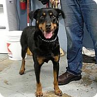 Adopt A Pet :: Pixie - Peru, IN