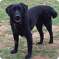 Adopt A Pet :: Jake Lee - Hagerstown, MD