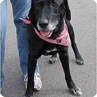 Adopt A Pet :: ABE - San Diego, CA