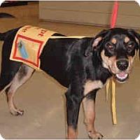 Adopt A Pet :: Sara in Flagstaff - Scottsdale, AZ