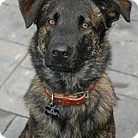 Adopt A Pet :: Pepe in SC - Jamestown, CA