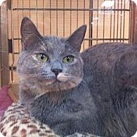 Adopt A Pet :: Addie - Modesto, CA