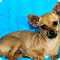 Adopt A Pet :: Logan - Kempner, TX