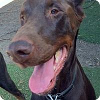 Adopt A Pet :: Barry - Sun Valley, CA