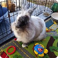 Adopt A Pet :: Tickle - Williston, FL