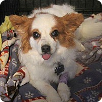 Adopt A Pet :: Abby - North Olmsted, OH