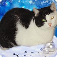 Adopt A Pet :: Sweetie Pie - Vansant, VA