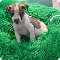 Adopt A Pet :: Pike - South Dennis, MA