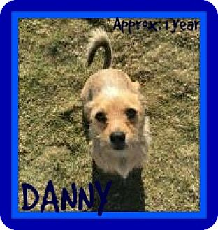 Terrier (Unknown Type, Small) Mix Dog for adoption in Allentown, Pennsylvania - DANNY