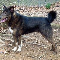 Adopt A Pet :: Damons - Ashland, AL