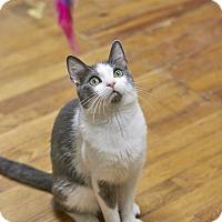 Adopt A Pet :: Gibson - Marietta, GA